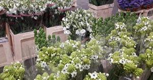 Vue des produits du fournisseur de Fleurs de Saison