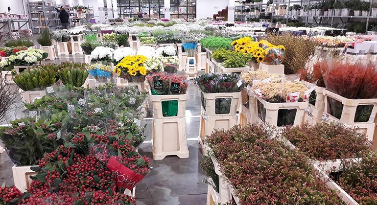 Fleurs de Saison - fournisseurs