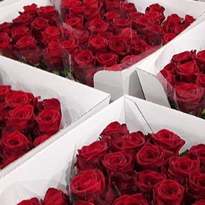 Bac de roses
