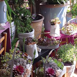 Jardin de plante - Fleurs de Saison
